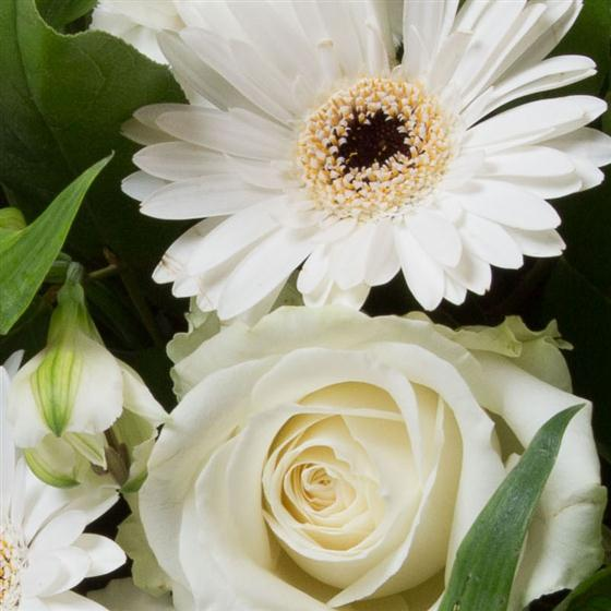 White & Cream Tied Bunch All About Flowers Florist Swindon